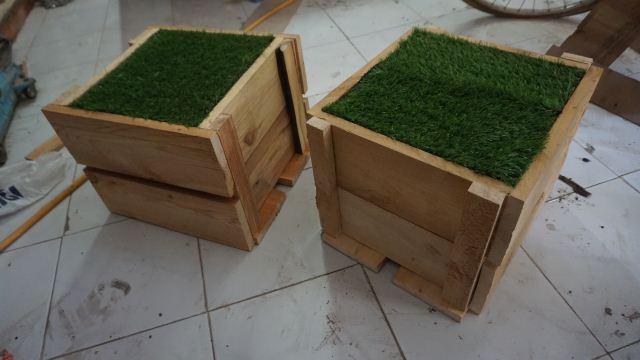 Planter pot tanaman kayu pinus